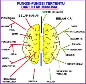melatih otak kanan